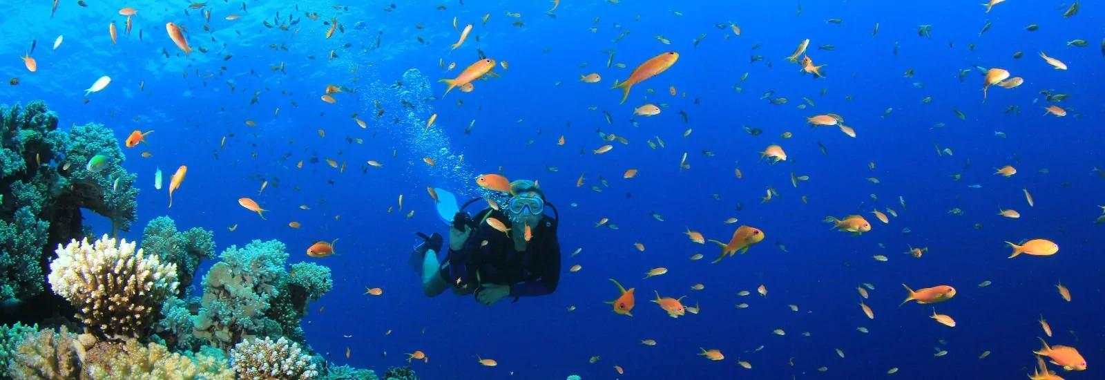 diving maremma toscana
